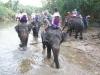 safari_tajlandia-2