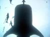 wielorybi.jpg