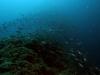 brac-nurkowanie-12