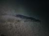 brac-nurkowanie-16
