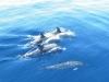 wyspy-kanaryjskie-nurkowanie-1.jpg