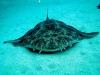wyspy-kanaryjskie-nurkowanie-3.jpg