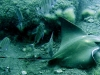 wyspy-kanaryjskie-nurkowanie-5.jpg