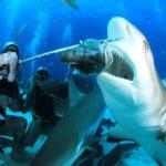 shark-feeding