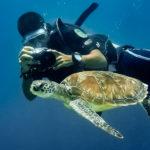 tanie nurkowanie Malezja