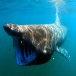 długoszpar nurkowanie w Szkocji