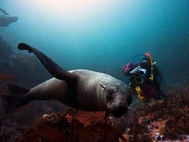nurkowanie z foką
