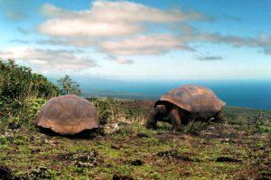 (Ecuador)–GalápagosIslands3
