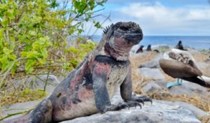 Unique-Wildlife-Galapagos