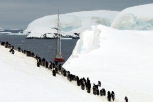 penguin_group